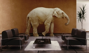 "PSI tackles the ""elephant in the room"""